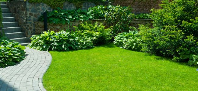 Mooie verzorgde tuin.