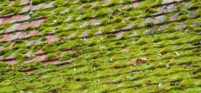 mosvorming op dakpannen
