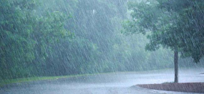 regen met bomen